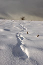 Free Footprint Trail In Winter Landscape Stock Photography - 31922432
