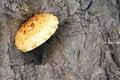 Free Wild Mushroom Royalty Free Stock Images - 31927359