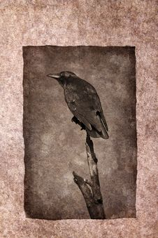 Free Crow Perched On Dead Tree Stock Images - 31922264
