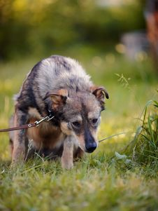 Free Dog On A Grass Stock Image - 31925611