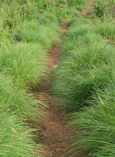 Free Grass Way Stock Photo - 31936940