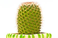Free Cactus Royalty Free Stock Images - 31938019
