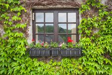 Free Vintage Window With Flowers Stock Image - 31946871