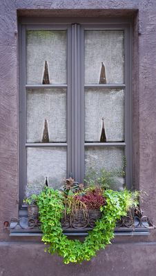 Free Traditional Window With Green Plants. Belgium Royalty Free Stock Photos - 31946908