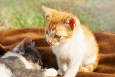Free Kittens Resting Stock Photography - 31951922