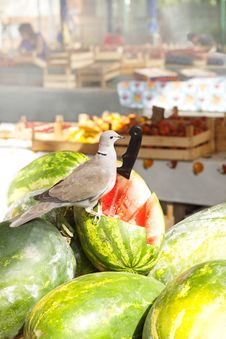 Free Dove On The Watermelon Stock Image - 31952191