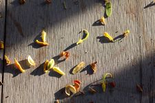 Free Dry Leaf Petal Fall The Floor Royalty Free Stock Photos - 31957218