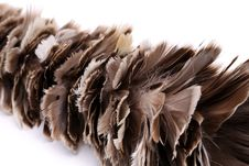Free Broom To Sweep Dust Feather Isolated Royalty Free Stock Images - 31957959