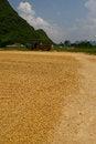 Free Drying Grain Stock Photography - 31974332