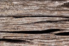 Free Old Tree Bark Stock Photography - 31971872