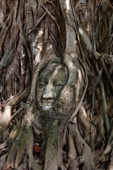 Free Head Of Buddha Stock Images - 31976214
