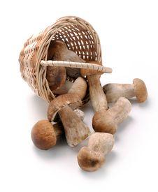 Free Mushrooms In A Basket Royalty Free Stock Image - 31976406