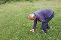 Free Elderly Man Picked Mushrooms In A Meadow Royalty Free Stock Photography - 31988357