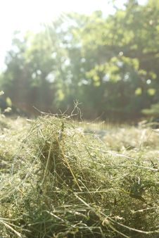 Free Haymaking, Detail View Of Hay, Stock Images - 31987844
