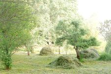 Free Haymaking, Hay And Trees In A Garden Stock Photos - 31987853