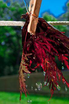 Free Washing Nature Stock Photo - 31987930