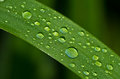 Free Dew Drops On A Grass Stock Images - 31995264