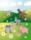 Free Farm Animals On Fields Stock Photos - 31999533