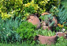 Free Flower Garden And Crockery Royalty Free Stock Photos - 31990138