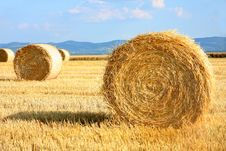 Free Field Of Freshly Cut Bales Stock Image - 31991191