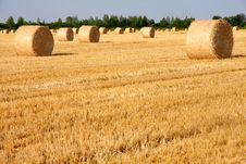 Free Field Of Freshly Cut Bales Royalty Free Stock Image - 31991206