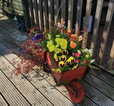 Free Barrow Full Of Flowers. Royalty Free Stock Photography - 31999757