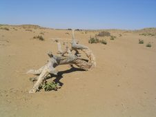 Free Dead Tree In Desert Royalty Free Stock Image - 320476