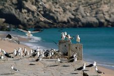 Free Seagulls Flight Stock Photo - 321820