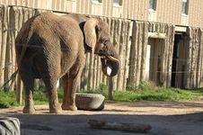 Free Playing Elephant Royalty Free Stock Photo - 322435