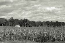 Free Cornfield Usa Stock Photography - 322712
