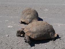 Turtle Power2 Royalty Free Stock Photos