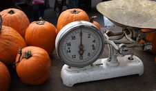 Free Pumpkins To Be Weighed Stock Image - 323551