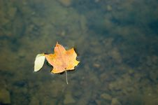 Free Leaf Floating In Water Stock Photography - 324322