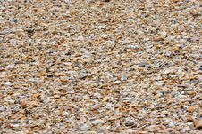 Free Sea Shells Stock Images - 324854
