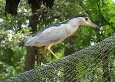 Free Free Bird Stock Photos - 324863