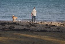 Free Woman & Dog On Playing On The Seashore Royalty Free Stock Image - 325046