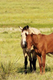 Free Horses Stock Image - 325191