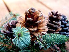 Free Pine Cones Royalty Free Stock Photos - 326178