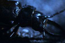Free Blue Bug Stock Photos - 326333