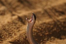 Free Snake Stock Photos - 329923