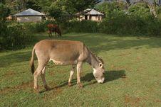 Free Donkey Royalty Free Stock Photography - 329937