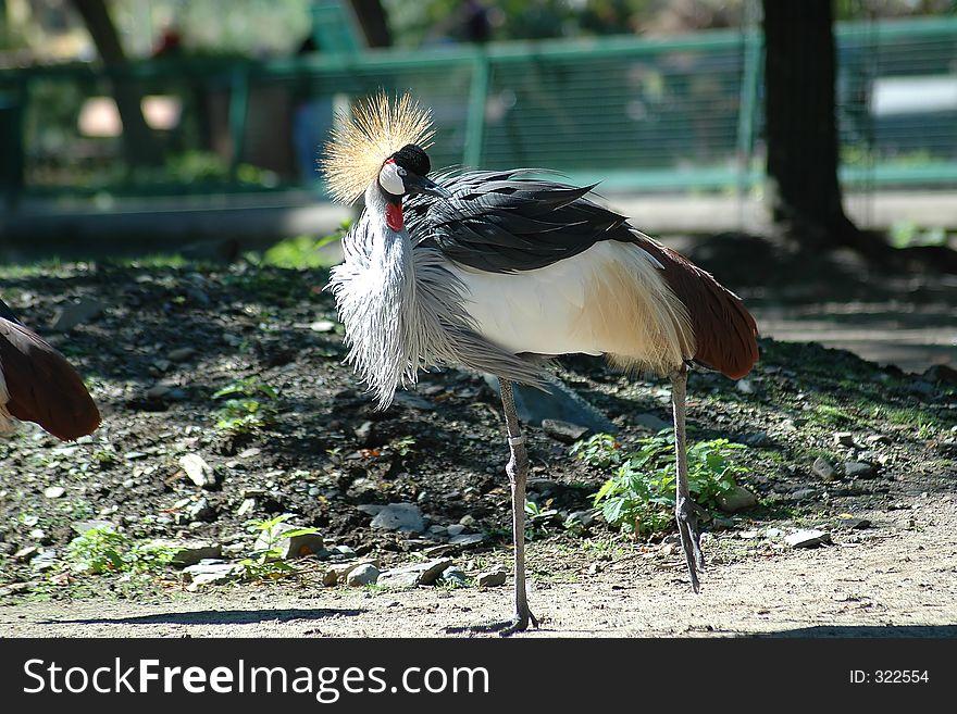 royal crane