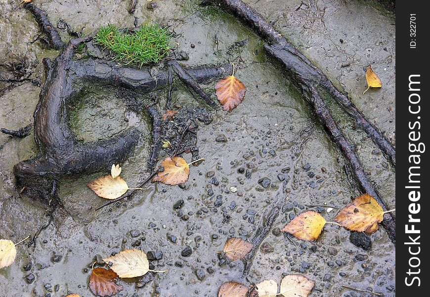 Roots, Leaves and Mud