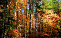 Free Autumn In A Forest Royalty Free Stock Photos - 3205798
