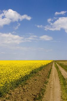 Countryroad Through Canola Field Royalty Free Stock Images