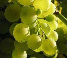 Free Grape 03 Stock Photography - 3200412