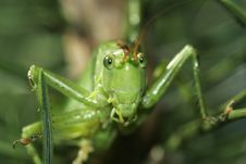 Free Grasshopper Stock Photo - 3201610