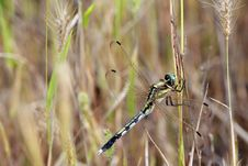 Free Dragonfly Stock Photo - 3203300