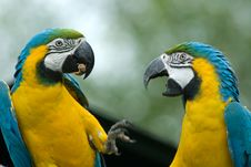 Free Blue-and-yellow Macaw Stock Photo - 3204110