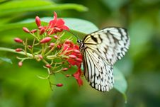 Free Beautiful Butterfly Royalty Free Stock Photography - 3204187